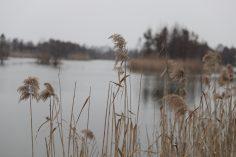 2019年3月3日无锡贡湖湾湿地公园